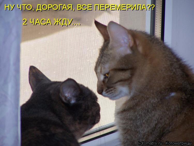 Котоматрица: НУ ЧТО, ДОРОГАЯ, ВСЕ ПЕРЕМЕРИЛА?? 2 ЧАСА ЖДУ....