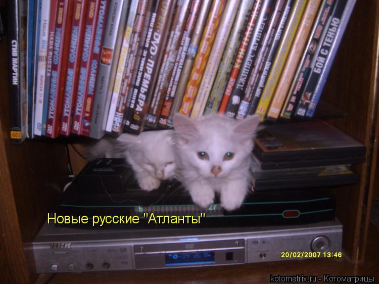 """Котоматрица: Новые русские """"Атланты"""""""