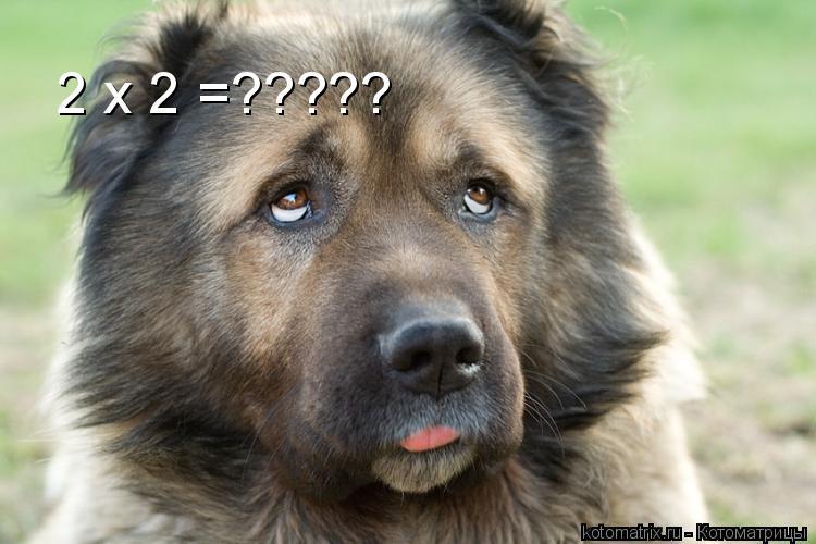 Котоматрица: 2 х 2 =?????