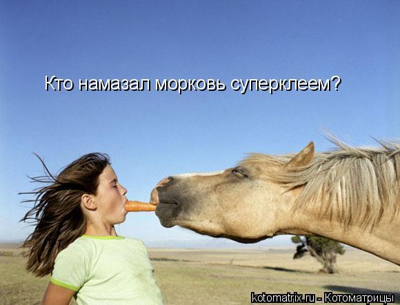 Котоматрица: Кто намазал морковь суперклеем?