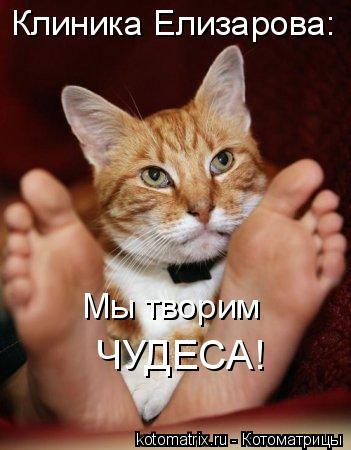 Котоматрица: Клиника Елизарова: Мы творим ЧУДЕСА!