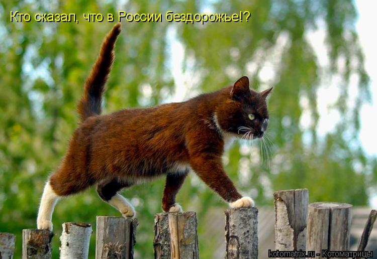 Котоматрица: Кто сказал, что в России бездорожье!?