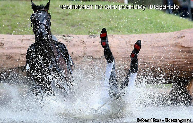 Котоматрица: чемпионат по синхронному плаванью