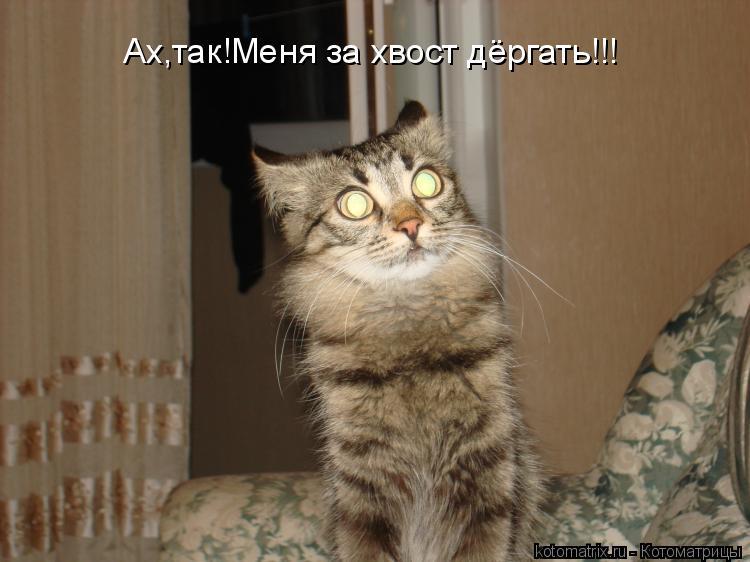 Котоматрица: Ах,так!Меня за хвост дёргать!!!