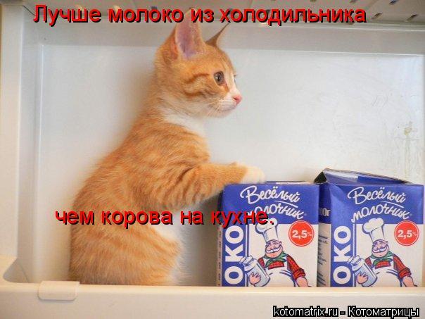Котоматрица: Лучше молоко из холодильника чем корова на кухне.