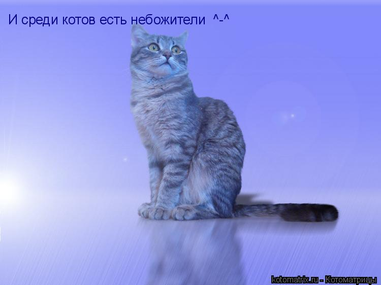 Котоматрица: И среди котов есть небожители  ^-^