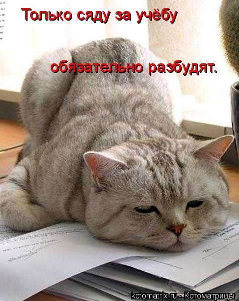 Котоматрица: Только сяду за учёбу  обязательно разбудят.