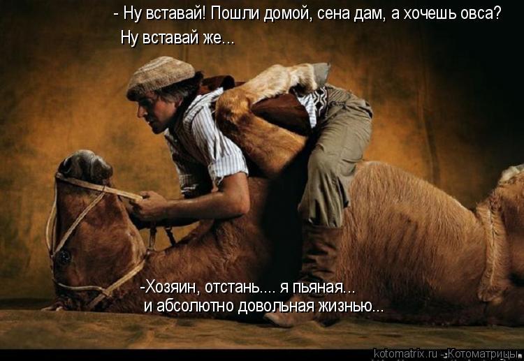 Котоматрица: - Ну вставай! Пошли домой, сена дам, а хочешь овса? Ну вставай же... -Хозяин, отстань.... я пьяная... и абсолютно довольная жизнью...