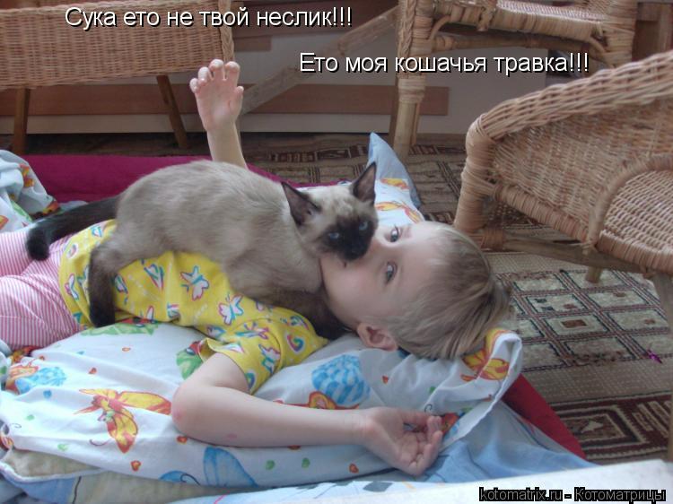 Котоматрица: Сука ето не твой неслик!!! Ето моя кошачья травка!!!