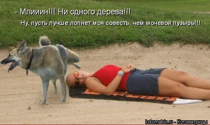 Котоматрица: - Млииин!!! Ни одного дерева!!! Ну, пусть лучше лопнет моя совесть, чем мочевой пузырь!!!