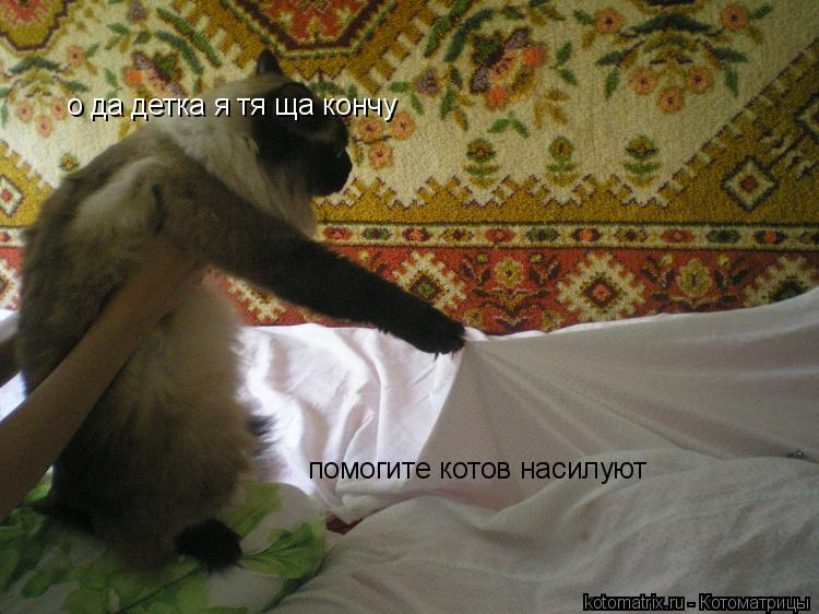 Котоматрица: о да детка я тя ща кончу помогите котов насилуют