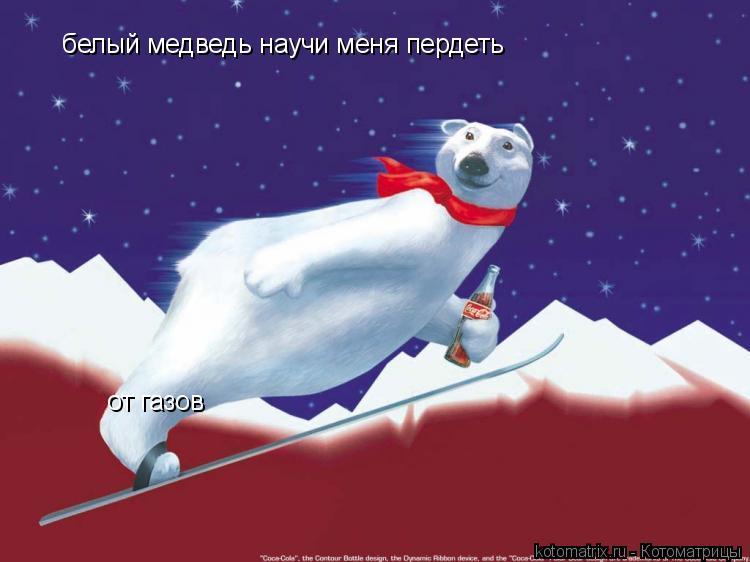 Котоматрица: белый медведь научи меня пердеть от газов