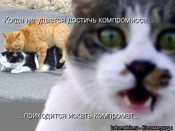Котоматрица: Когда не удается достичь компромисса... ...приходится искать компромат...