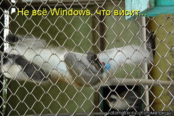 Котоматрица: Не всё Windows, что висит...