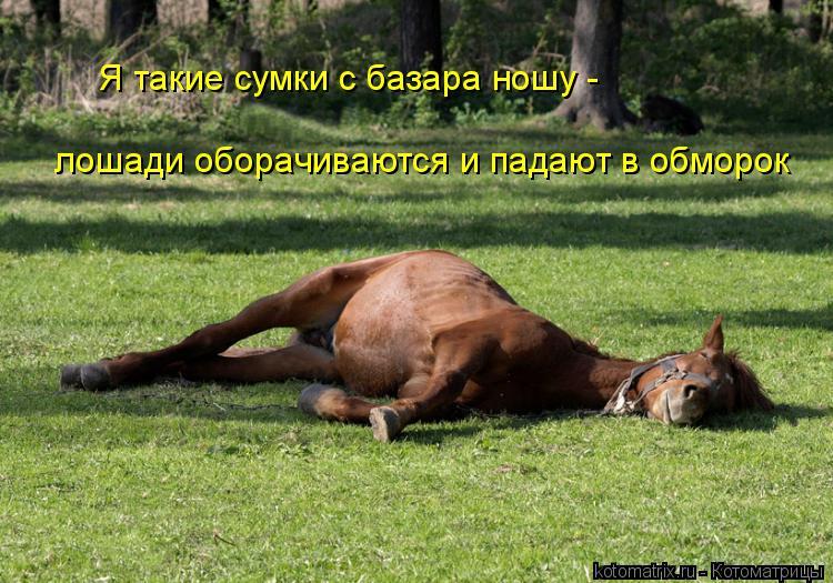 Котоматрица: Я такие сумки с базара ношу -  лошади оборачиваются и падают в обморок