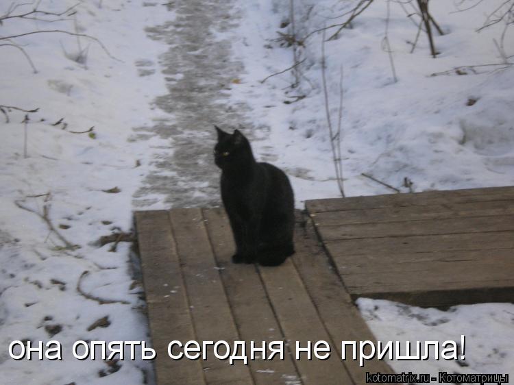 Котоматрица: она опять сегодня не пришла!