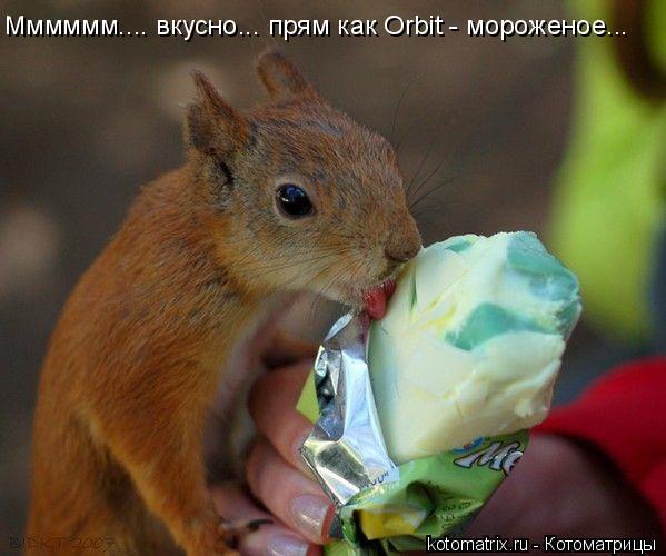Котоматрица: Мммммм.... вкусно... прям как Orbit - мороженое...