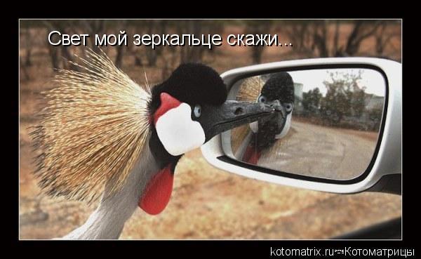 Котоматрица: Свет мой зеркальце скажи...