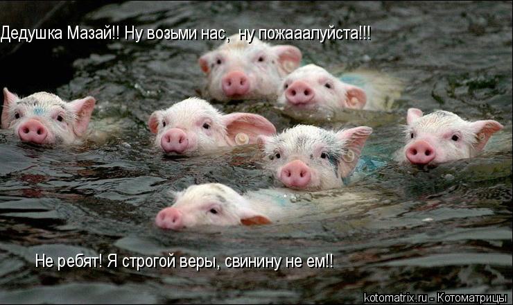 Котоматрица: Дедушка Мазай!! Ну возьми нас,  ну пожааалуйста!!! Не ребят! Я строгой веры, свинину не ем!!