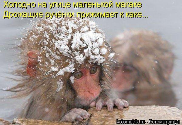 Котоматрица: Холодно на улице маленькой макаке Дрожащие ручёнки прижимает к каке...