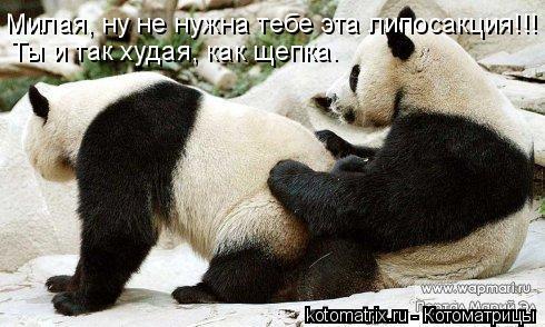 Котоматрица: Милая, ну не нужна тебе эта липосакция!!! Ты и так худая, как щепка.