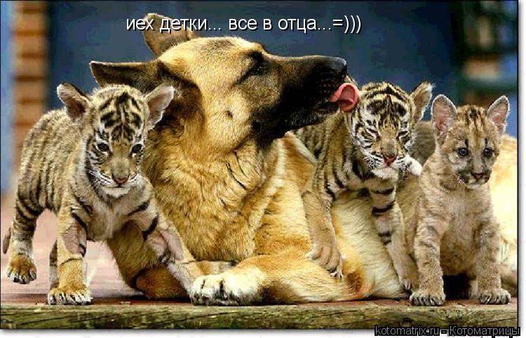Котоматрица: иех детки... все в отца...=)))