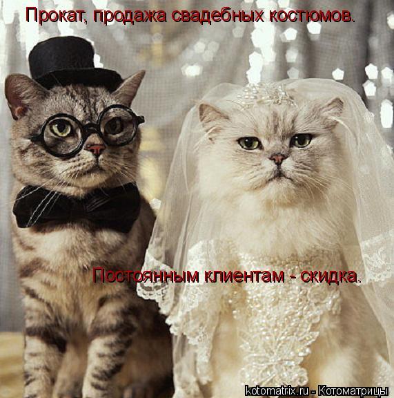 Котоматрица: Прокат, продажа свадебных костюмов.  Постоянным клиентам - скидка.