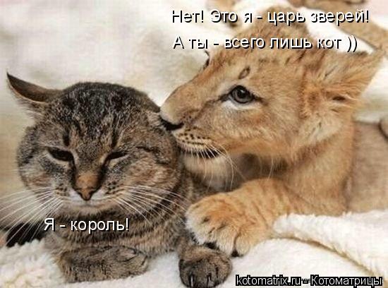 Котоматрица: Я - король! Нет! Это я - царь зверей! А ты - всего лишь кот ))