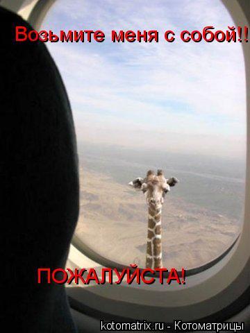 Котоматрица: Возьмите меня с собой!!!!!! ПОЖАЛУЙСТА!