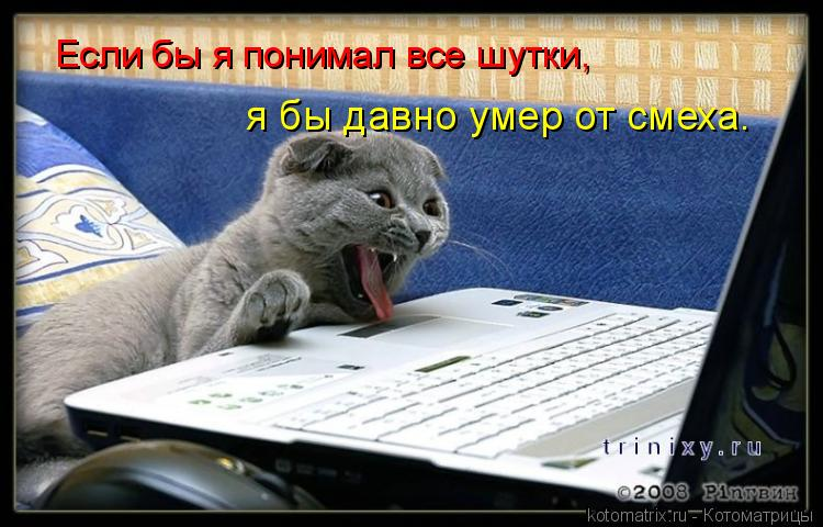 Котоматрица: Если бы я понимал все шутки,  я бы давно умер от смеха.