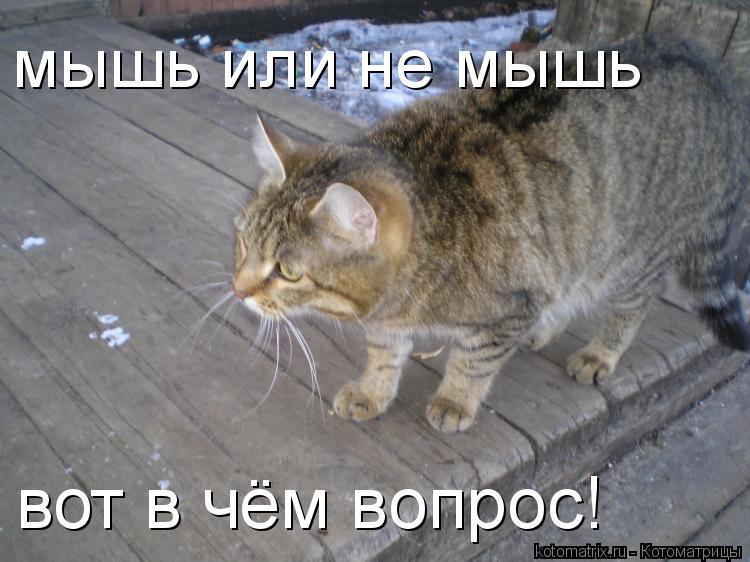 Котоматрица: мышь или не мышь вот в чём вопрос!