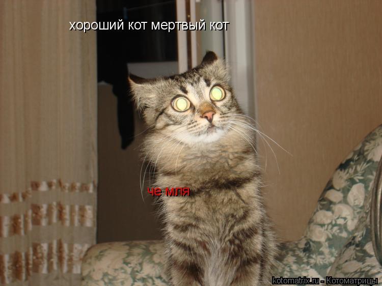 Котоматрица: хороший кот мертвый кот че мля