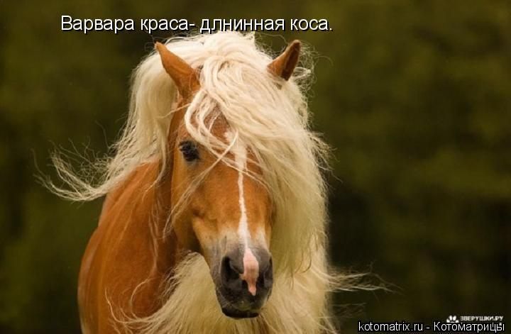 Котоматрица: Варвара краса- длнинная коса.