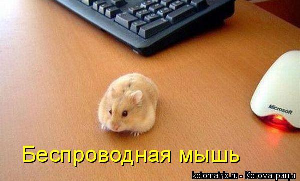 Котоматрица: Беспроводная мышь