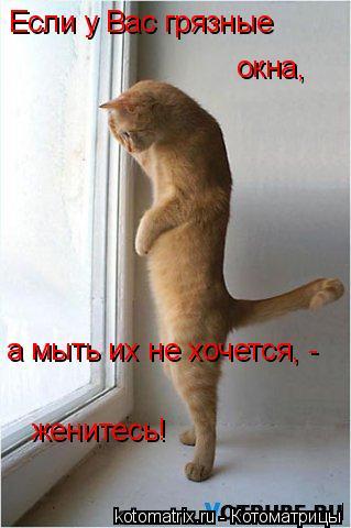 Котоматрица: Если у Вас грязные окна, а мыть их не хочется, - женитесь!