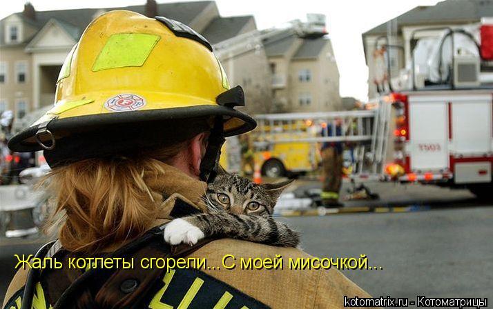 Котоматрица: Жаль котлеты сгорели...С моей мисочкой...