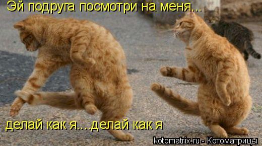 Котоматрица: Эй подруга посмотри на меня... делай как я....делай как я
