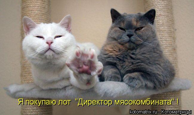 "Котоматрица: Я покупаю лот  ""Директор мясокомбината"" !"