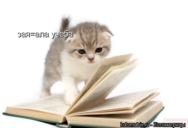 Котоматрица: зая=ала учеба