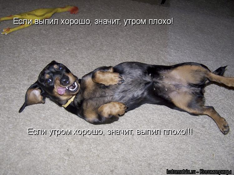 Котоматрица: Если выпил хорошо, значит, утром плохо! Если утром хорошо, значит, выпил плохо!!!
