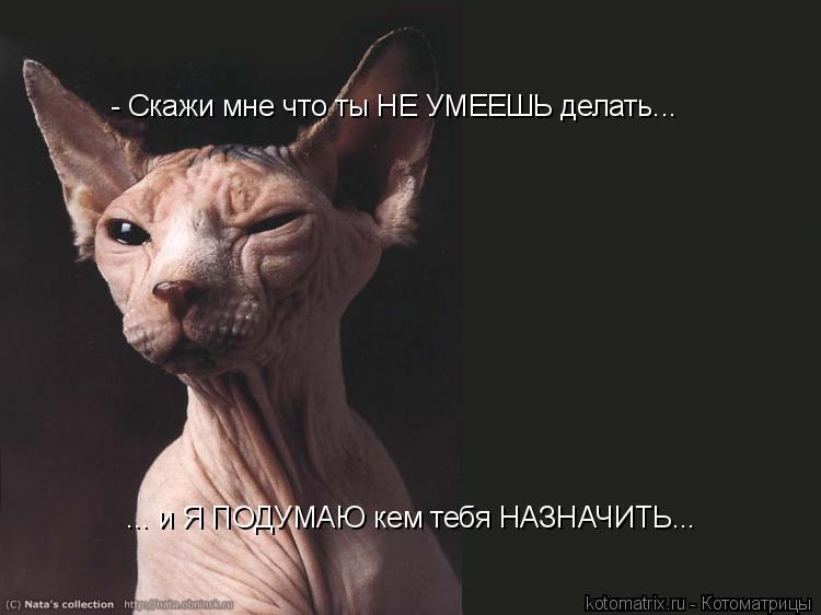Котоматрица: - Скажи мне что ты НЕ УМЕЕШЬ делать... ... и Я ПОДУМАЮ кем тебя НАЗНАЧИТЬ...