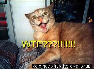 Котоматрица: WTF???!!!!!!!