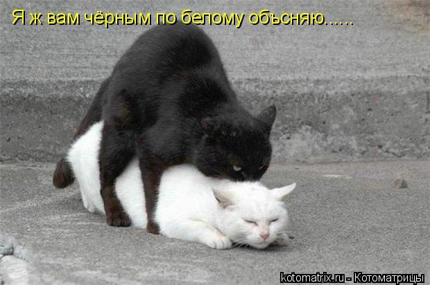 Котоматрица: Я ж вам чёрным по белому объсняю......