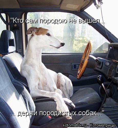 """Котоматрица: """"Кто сам породою не вышел... ... держи породистых собак..."""""""