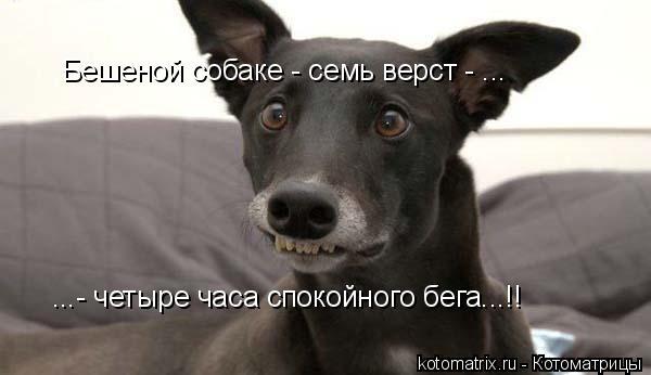 Котоматрица: Бешеной собаке - семь верст - ... ...- четыре часа спокойного бега...!!