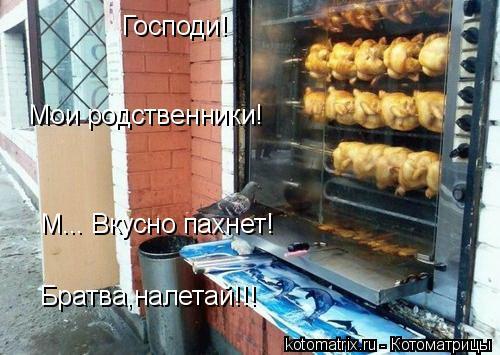 Котоматрица: Господи! Мои родственники! М... Вкусно пахнет! Братва,налетай!!!