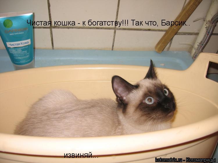 Котоматрица: Чистая кошка - к богатству!!! Так что, Барсик.. извиняй...