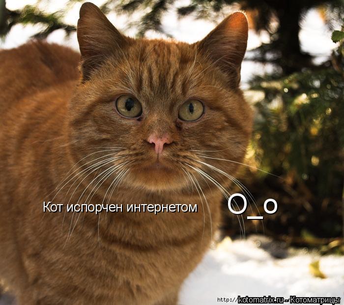 Котоматрица: О_о Кот испорчен интернетом