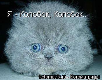 Котоматрица: Я - Колобок, Колобок.....