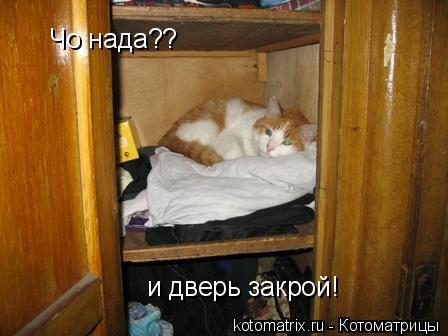 Котоматрица: Чо нада?? и дверь закрой!